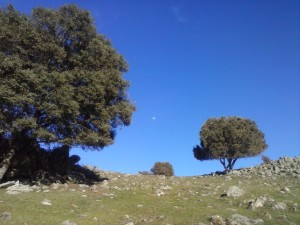 TrangoWorld Trebol Trail
