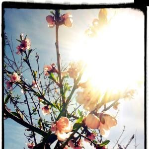 correr en primavera